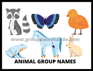 Animal Group Names (2)