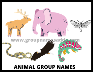 Animal group names list