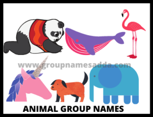 Best Animal Group Names
