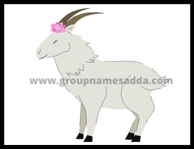 Goat Names ideas