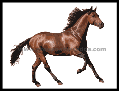 Horse Name Ideas Best Horse Name Ideas