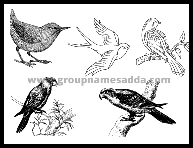 Names For Groups Of Birds (2)
