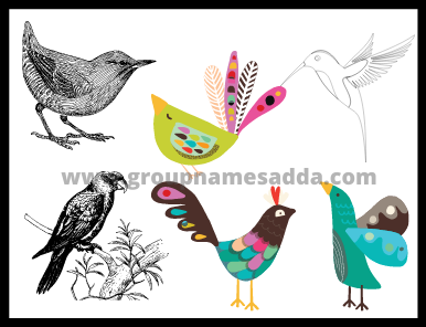 Names for groups of birds list