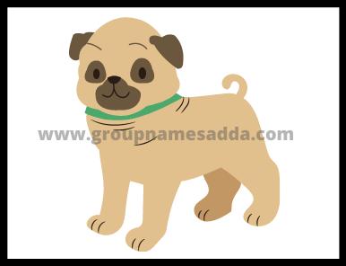 Best Bulldog Name Idea