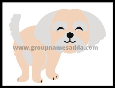 Poodle Names Ideas (3)