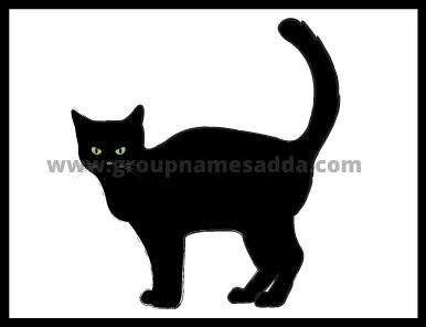 Best 200 + Cute Cat Names