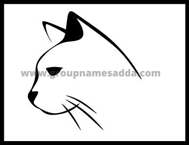 Cute Cat Names Best 200 + Cute Cat Names